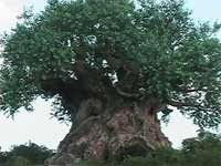 Animal Kingdoms Signature Icon, the Tree of Life!