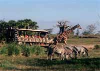 Animal Kingdom Safari Ride