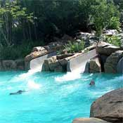 Typhoon Lagoon's Water Slides!